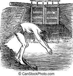Position Before Diving, vintage engraved illustration