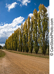 A Row of Poplars