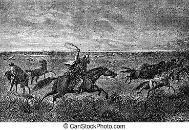 The Gauchos of the Pampas. Their bolas will wrap around the...