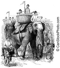 Elephants Burmah These animals are advancing majestically,...