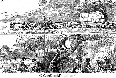 Fig 1.the truck stuck, Fig 2 the camp, Fig 3 Honeycomb,...