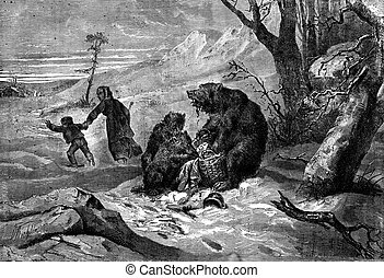 The bear and cubs Lunch interrupted, vintage engraving - The...