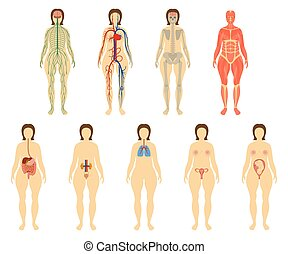 Set of human organs and systems of the body vitality....