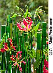 Flowering bamboo plant in the garden