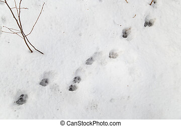 dog footprints on white snow