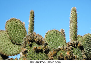 cactus fields on a sky background