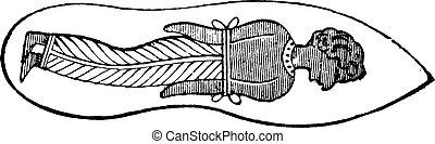 Sandal, vintage engraving - Sandal, vintage engraved...