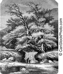 Lys Valley, vintage engraving - Lys Valley, vintage engraved...