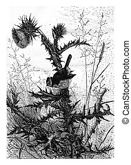 The Eurasian Blue Tit, vintage engraving. - The Eurasian...
