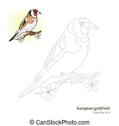 European goldfinch bird learn to draw vector - European...