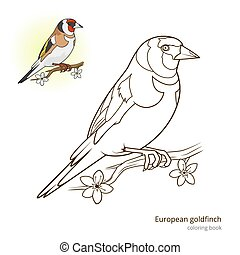 European goldfinch color book vector - European goldfinch...