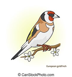 European goldfinch bird educational game vector - European...