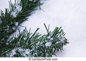 fir branch on snow