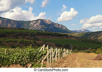 Landscape with vineyards and mountains on blue sky background