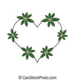 Rauvolfia Serpentina Blossoms in A Heart Shape
