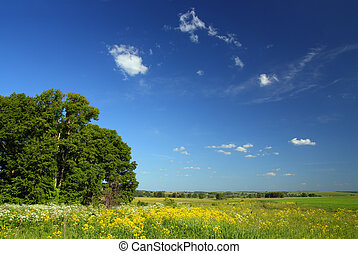 summer landscape with small woods