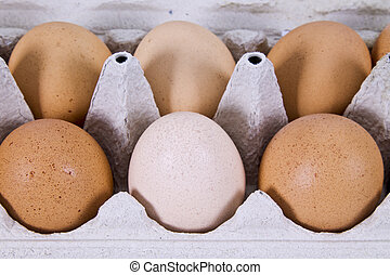 egg carton with eggs isolated