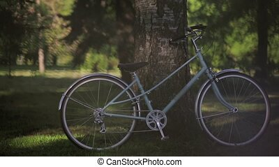 Blue bicycle stays at the tree in park in summer sunny evening. Pan horizontal.