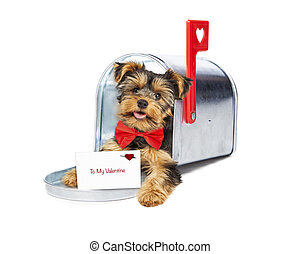 Puppy Delivering Valentines Day Card - Cute little puppy...