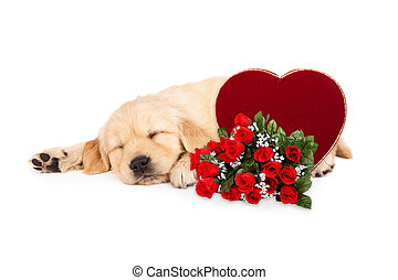 Sleeping Puppy Valentines Heart and Roses - A cute little...