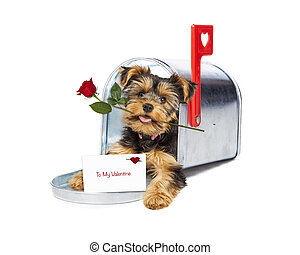 Puppy Delivering Valentine and Rose - Cute little puppy in a...