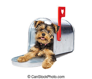 Puppy Delivering Valentines Day Card - Adorable little...