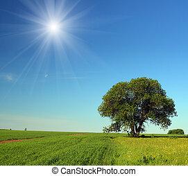 single tree in summer field