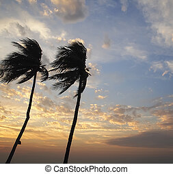 Coconut tree in the sunset sky