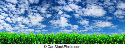 panoramic image of green grass on a background of blue sky...