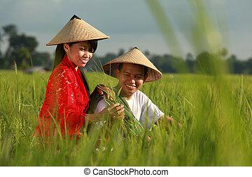 asian farmer at rice field