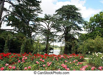 Rose garden at a lakeside - Blenheim Palace in Woodstock,...