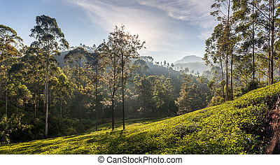 Beautiful panoramic view of a typical tea plantation in Sri...
