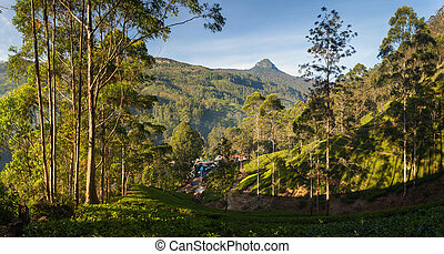 Panorama of Dalhousie town with Adams peak and tea...