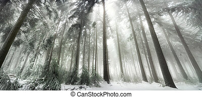 Snow covered forest with magical light in winter, white...