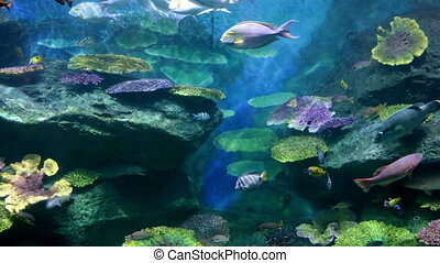 Fishes in corals. Underwater world - Fishes in corals...