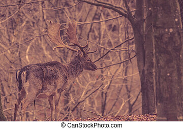 Deer in a forest at autumn