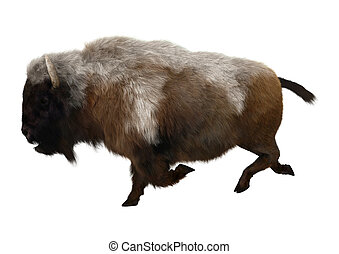 American Bison on White - 3D digital render of an American...