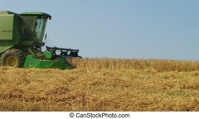 Combine Harvesting Wheat 06 - Combine harvesting wheat crop.