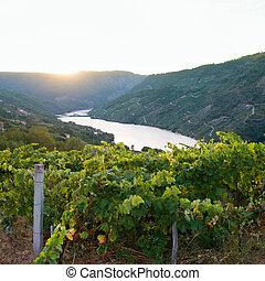 Sil canyon, Ribeira Sacra, Ourense, Galicia, Spain....