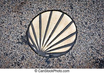 pilgrim shell