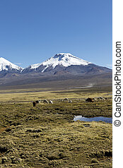landscape of the Andes Mountains, with llamas grazing.