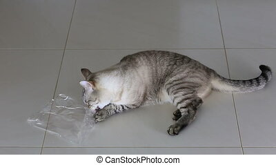Funny cat chewing plastic bag. - Funny beautiful cat chewing...