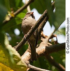 bird living in Ethiopia