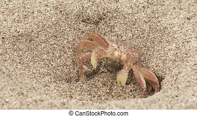 Crab At Beach