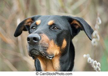 イースター, 犬