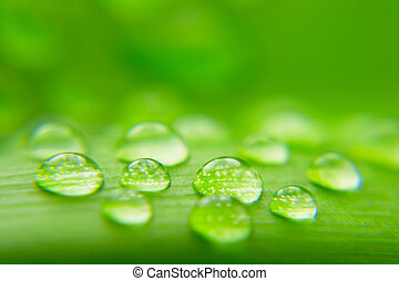 Water drops on plant leaf, close-up background
