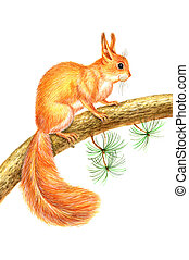 Drawing squirrel - Beautiful watercolor drawing squirrel on...