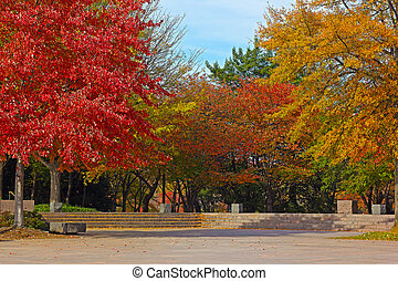 Colorful deciduous trees in park - Trees in autumn foliage...