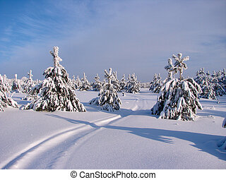 Beautiful winter forest - a photo 2 - Beautiful winter...
