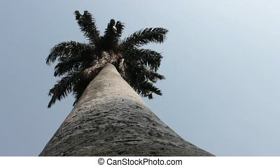 Trunk Of Palm Tree